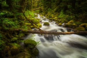 Flowing Waters of Larch Mountain
